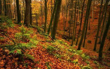 Deep fall von Joris Pannemans - Loris Photography