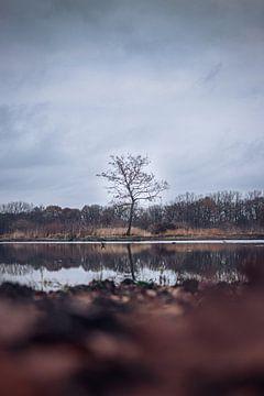 Der letzte Baum von Tom Paquay