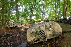 Abandoned in the woods