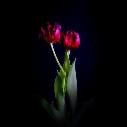 Traquer une tulipe - un portrait de famille, vieillir sur