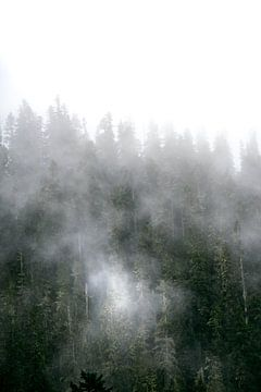 Mist in de bomen van Rauwworks