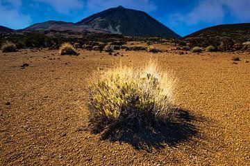 Pico de Teide van Walter G. Allgöwer