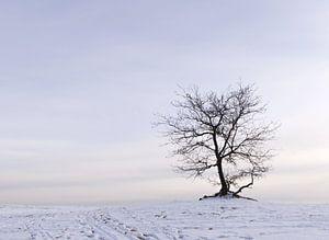 Boom in de sneeuw in het Nationaal Park De Loonse en Drunense duinen