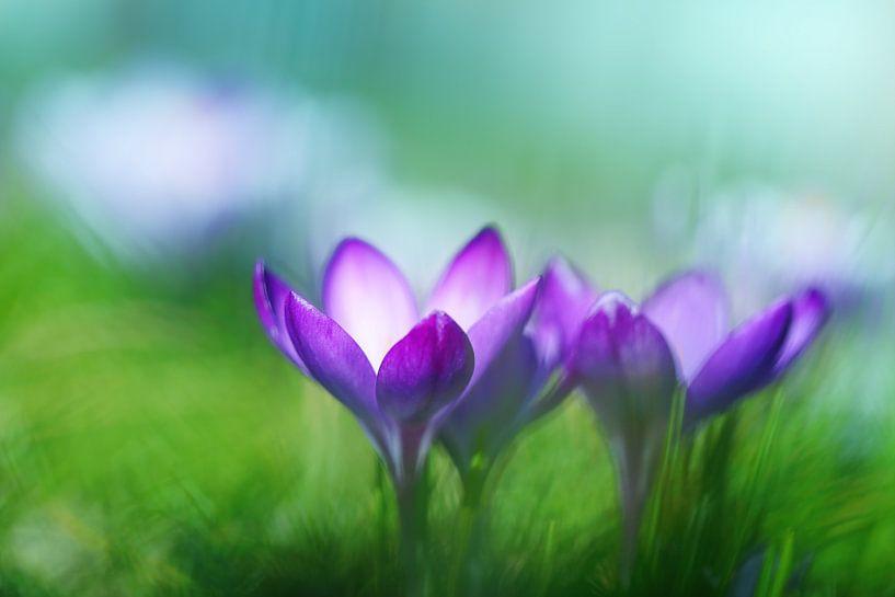 Symphony of spring van LHJB Photography