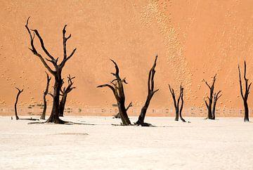 Dode Vlei, Namibië van Angelika Stern