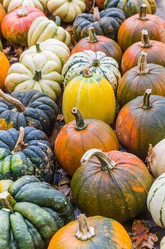 Bunte Kürbisse in verschiedenen Formen und Farben im Herbst von Marc Venema