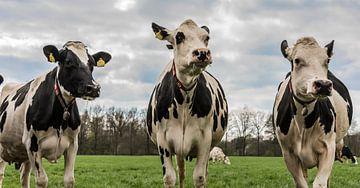 Koeien van Ans Bastiaanssen