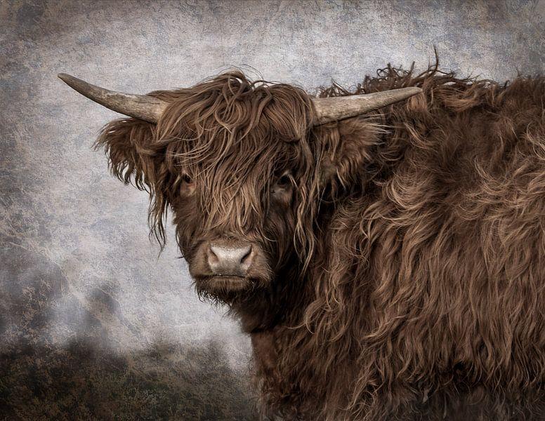 Schotse Hooglander van natascha verbij