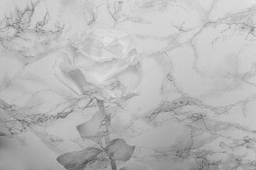 Stein Rose von Loutje fotografie & styling