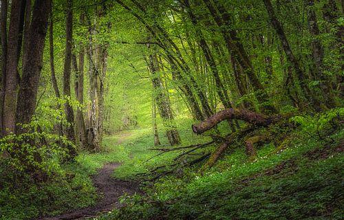 Regendag in de bossen van Hogne bij Marche-en-Famenne