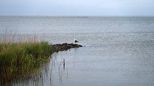 Mouette dans le fjord