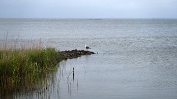 Möwe am Fjord von BVpix