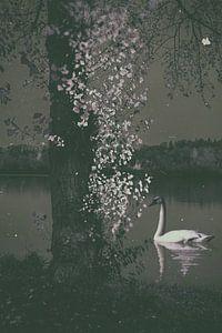 Night at Swan Lake
