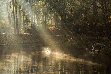 Nebliger Sonnenaufgang am Teich im Wald von Zeister in Zeist! von Peter Haastrecht, van