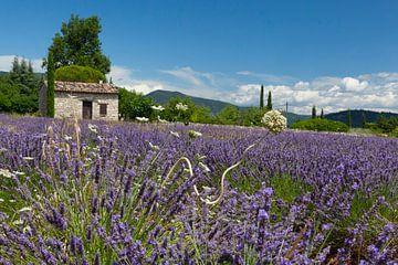 Lavendel von Hermen Buurman