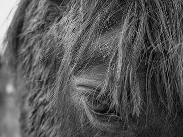 Doordringende blik van een paard von RJH van de Kimmenade