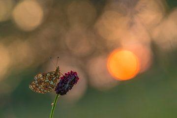 Silbermond bei Sonnenaufgang von Erik Veldkamp