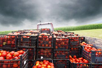 Tracteur avec plate-forme de chargement remplie de tomates sur Besa Art