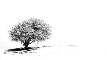 Arbre solitaire dans la neige 1 (étroit) sur Jacqueline Lodder