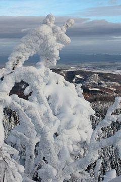 Winterlandschap in de Harz van t.ART