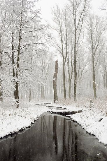 Snow covered swamp forest in the Lower Rhine Region, old Rhine sling, Winter in Meerbusch, Ilveriche