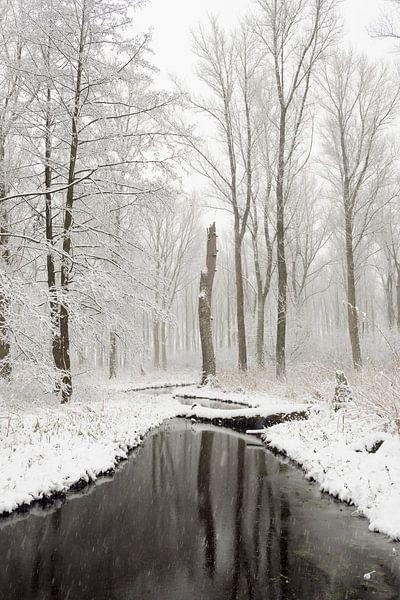 Snow covered swamp forest in the Lower Rhine Region, old Rhine sling, Winter in Meerbusch, Ilveriche van wunderbare Erde