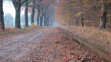 oude beukenlaan herfstkleuren mist van FHoo