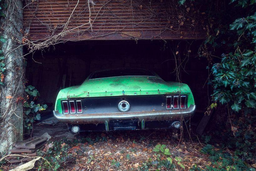Lonely Green Horse von Roman Robroek