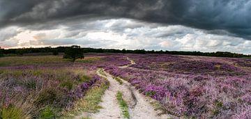 Panorama mit erstaunlich dunklen Wolken über der Blütezeit der Gasterse-Dünen. von Arthur Puls Photography