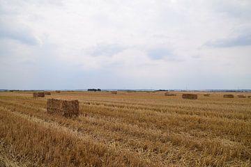 Strohballen trocknen auf einem trockenen Grasfeld in den belgischen Ardennen von Robin Verhoef