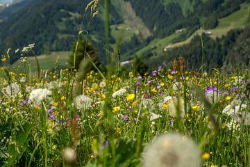 Bloemenveld in de alpen in Oosnterijk van Reis Genie