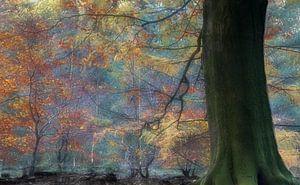 Herfstkleuren in Speulderbos