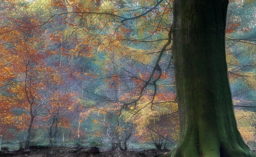 Herfstkleuren in Speulderbos van Ronald van Dijk