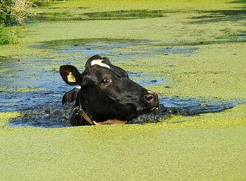 Zwemmende Koe van Gert van der Hee