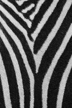 Strepenpatroon Zebra von Bart van Dinten