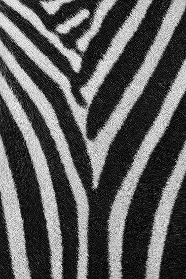 Strepenpatroon Zebra van Bart van Dinten