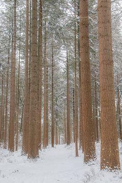 Sparren in de sneeuw van Hans Monasso