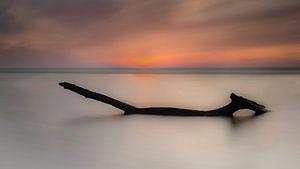 Northsea Timber van Brian Decrop