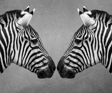 Nahaufnahme von zwei Zebras in Schwarz-Weiß von Marjolein van Middelkoop