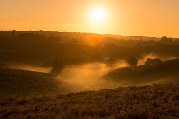 Sonnenaufgang über der Heide... Veluwe *Niederlande* von wunderbare Erde