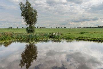 Spiegeling boon in Brandwijksche Vliet van Beeldbank Alblasserwaard