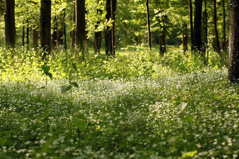 lente Bos van Renate Knapp