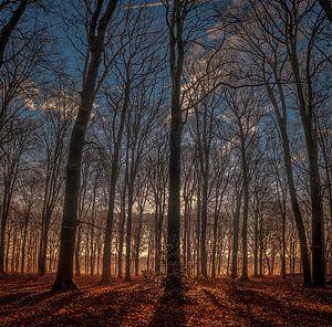 Hoge bomen......