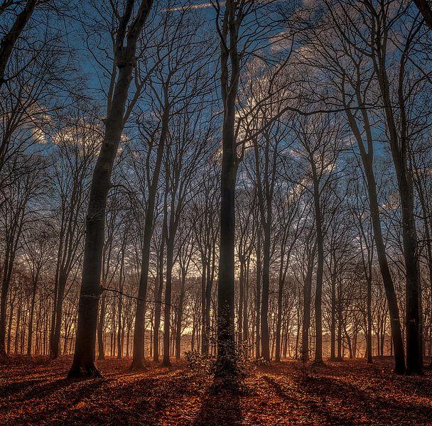 Hoge bomen...... van Robin Pics (verliefd op Utrecht)