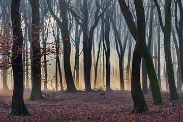 Sonnenstrahlen durch den Wald von Adri Klaassen