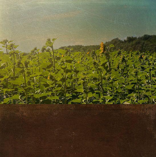 Zonnebloemen van Anouschka Hendriks