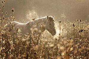 Pferd im Morgengrauen