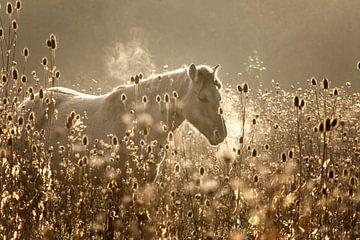 paard in ochtendgloren van wilma ten Bhömer