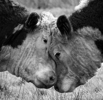 Emotion der Kühe von Robin van der Land