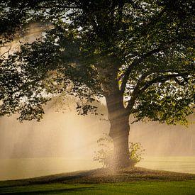 Regen boom van Pascal Raymond Dorland